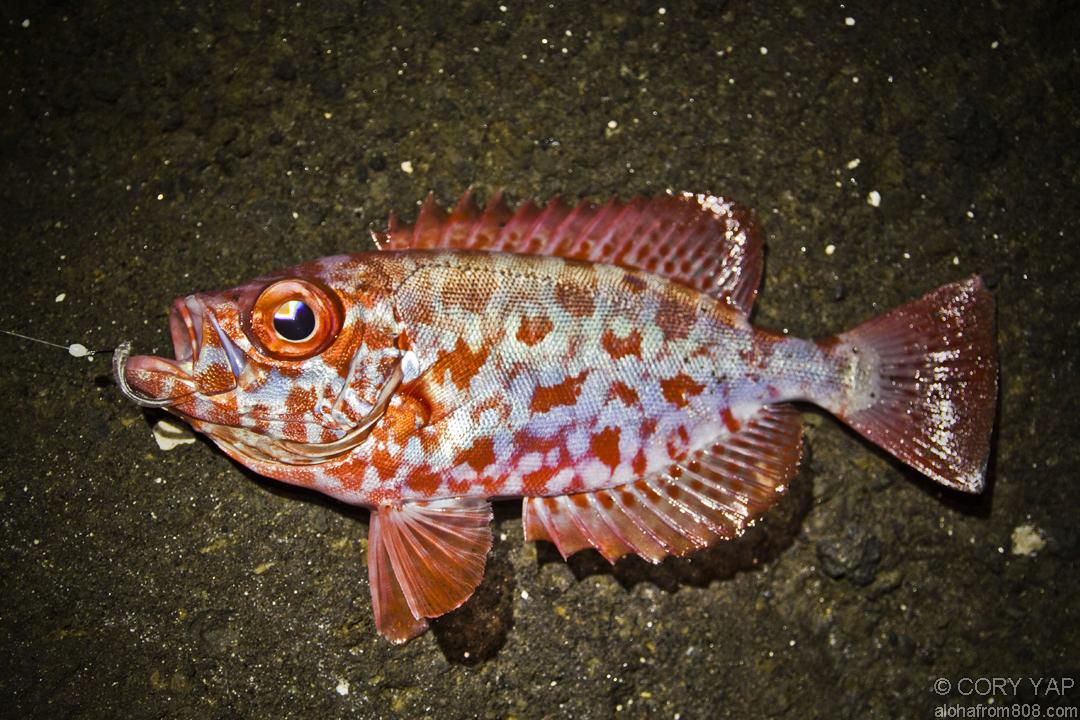 Hawaii Shorefishing - Living in Hawaii - Moving to Oahu, Maui ...
