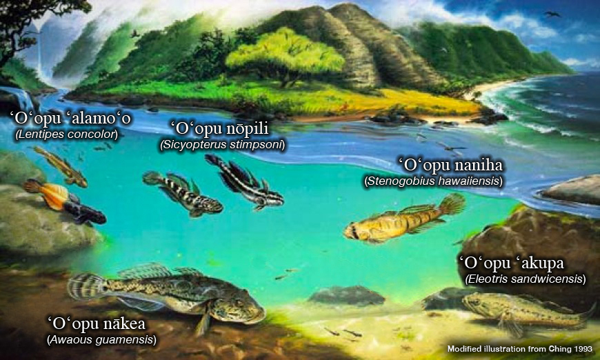 freshwater fish of hawaii